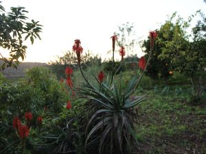 garden casa da osga tavira