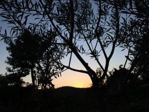sunset garden casa da osga tavira