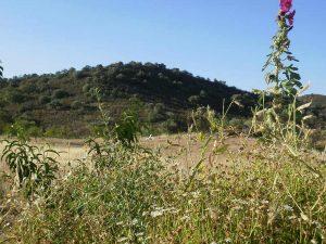 hill view casa da osga tavira